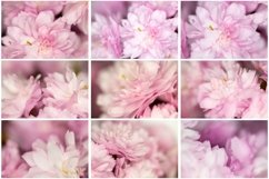 0 Pink Petal Flower Photograph Background Collection by Squeeb Creative
