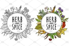 Circle shape Herb and spice. Vector vintage engraving Product Image 1