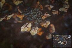 10 Fine Art Textures CANVAS - SET 2 Product Image 3