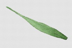 Spike of wheat Watercolor png Product Image 2