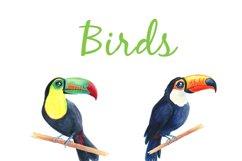 Birds Watercolor Cardinal Clip Art Product Image 2