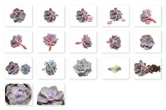 Succulent Plants Isolated Photo Bundle Product Image 3