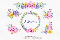 Astrantia - Digital Watercolor Floral Flower Style Clipart Product Image 3