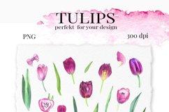 TULIPS. SPRING BOUQUET. Hand painteg watercolor clip art. Product Image 5