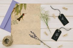 16 Antique Humming Birds Trochilidae Nature Digital Papers Product Image 6