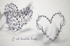 Hand drawn Lavender clipart. Valentines lavender heart. Product Image 4