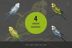 Budgerigar, Parakeet parrot, bird illustration, vector & PNG Product Image 2