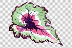 Nautilus-leaf begonia Watercolor png Product Image 5