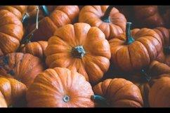 Pumpkins Stock Photo Bundle Product Image 3
