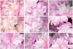50 Pink Flower Blossom Photographs Close Up Backgrounds Product Image 4
