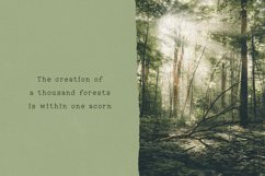 Into the Wild Serif Font Product Image 6