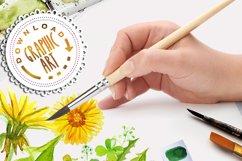 Summer Dandelion Clipart Watercolor  Product Image 5