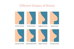 Breast shapes vector illustration Product Image 1