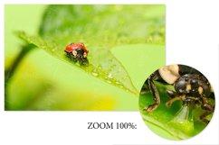 Ladybug. Styled stock photo set. Product Image 2