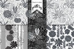 Succulents. Product Image 5