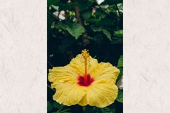 Hibiscus #14 - Yellow Tropical Flower Product Image 1