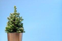Mini Christmas tree on blue background. Minimalistic concept Product Image 2