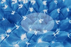 Cactus surface with needles pattern macro toned in blue Product Image 1