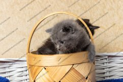 13 photos of little kittens Product Image 4