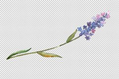 Bouquet of idyll lavender Watercolor png Product Image 6