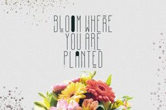 [Spring Vibes] April Display Font Product Image 4