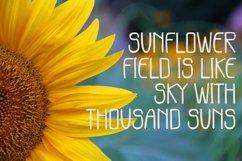 Sunflower Garden Product Image 4