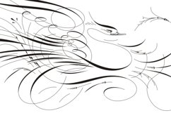 Calligraphic Birds Family Pack Product Image 3