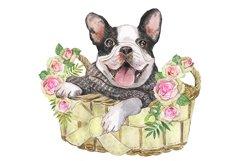 French Bulldog Watercolor dog clipart. Watercolor pet Product Image 2