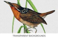 Birds Bundle Vintage Clipart Set Product Image 3