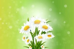 Spring background with chamomile flowers bouquet Product Image 1