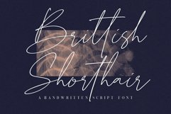 Brittish Shorthair Script Product Image 1