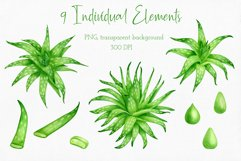 Aloe Vera Clipart. Watercolor Succulent PNG Collection Product Image 2