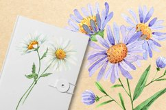 wildflowers watercolor illustrations set Product Image 2