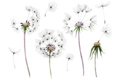 Bouquet rainbow dandelion watercolor png Product Image 1