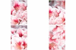 40 Pink Flower Blossom Photographs Close Up Product Image 2