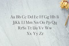 Aludra Serif 12 Font Family Pack Product Image 2
