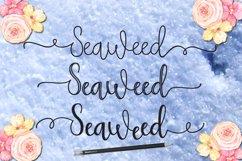 Seaweed Product Image 2