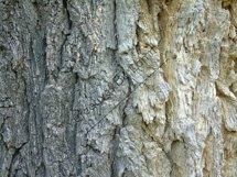 Tree Bark Background Product Image 1