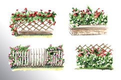 Fairy climbing roses Product Image 2