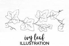 Ivy Leaf - Vintage Plant Engraving Product Image 1