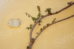 Tree on the yellow textured wall Product Image 1