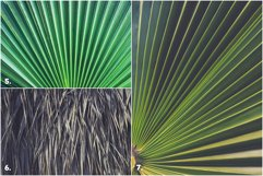 11 Palm Leaves Textures Product Image 3