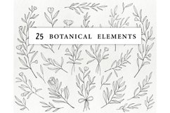Hand drawn floral illustrations - botanical graphics lineart Product Image 2