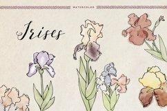 Watercolor Irises Product Image 1
