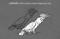 Cockatoo ink lineart, Parrot clip art, Bird vector file Product Image 2