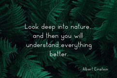 Nature Display Line Font Product Image 2