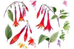Orange-red Fuchsia watercolor png Product Image 1