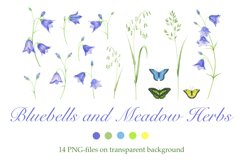 Bluebells and Meadow Herbs Product Image 1