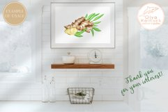 Ginger Root Clipart Collection. Watercolor Ginger Spice Product Image 6