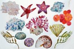 Tropical Sea Life Watercolor Clip Art Product Image 3